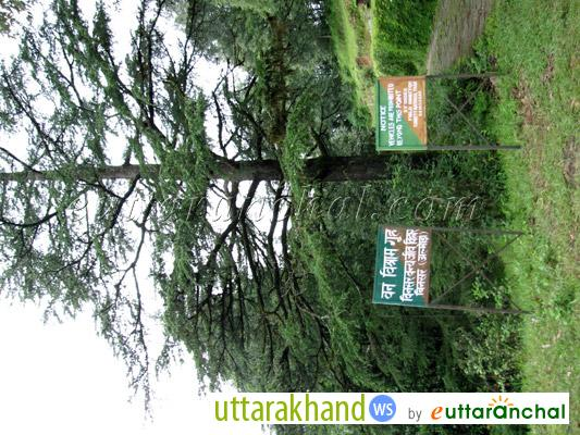 Way to Forest Rest House in Binsar