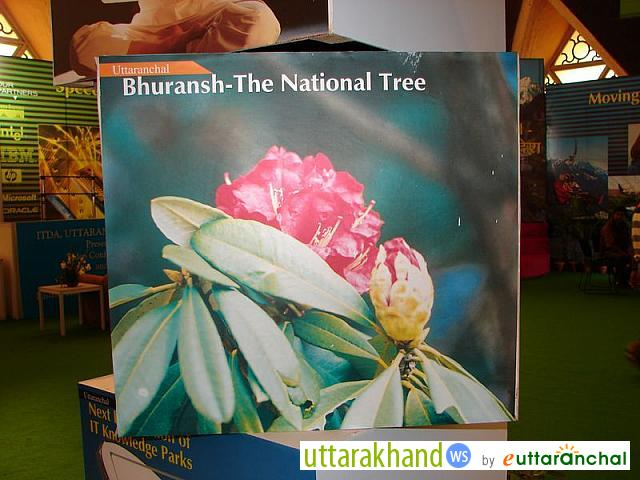 Buransh - the State Flower of Uttarakhand