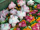 Different flowers used for Pooja in Mansa Devi Mandir