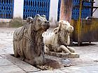 Cow Idols in Bageshwar