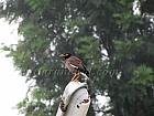 Bird Watching in Kausani